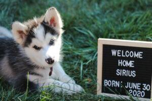 My Dog Sirius